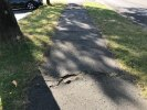 Damaged pavement caused by tree roots